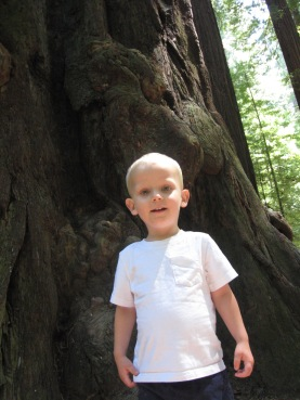 A few weeks before his diagnosis, marveling at the giant redwoods.